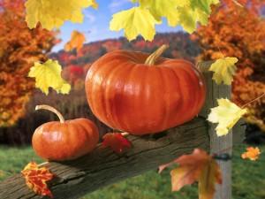 la zucca e foglie d'autunno