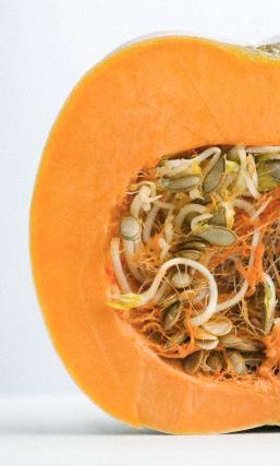 la zucca ornamentale gustosa benefica bauer blog