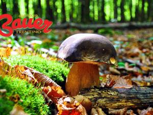 autunno-funghi-porcini-bauer