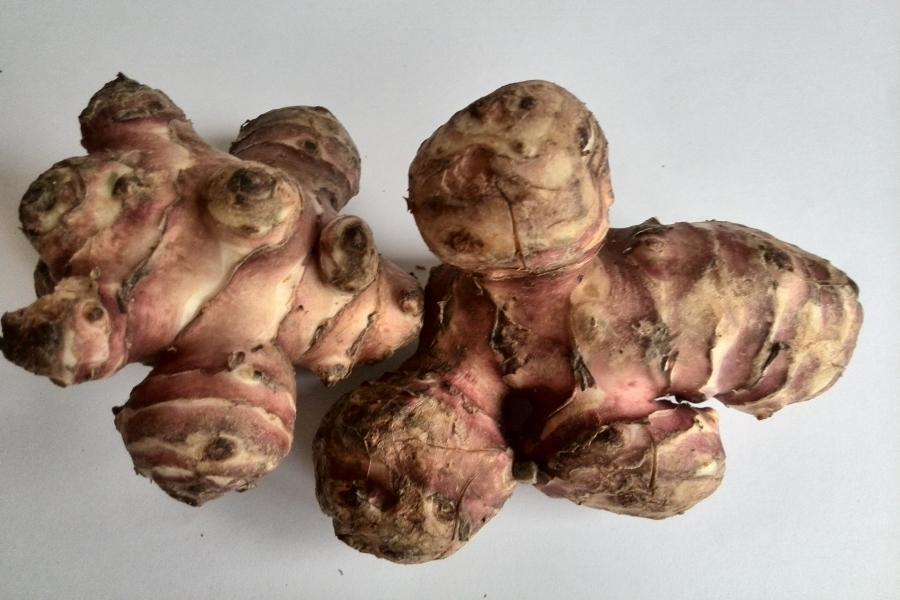Topinambur-tubero