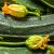 Arriva la stagione delle zucchine!