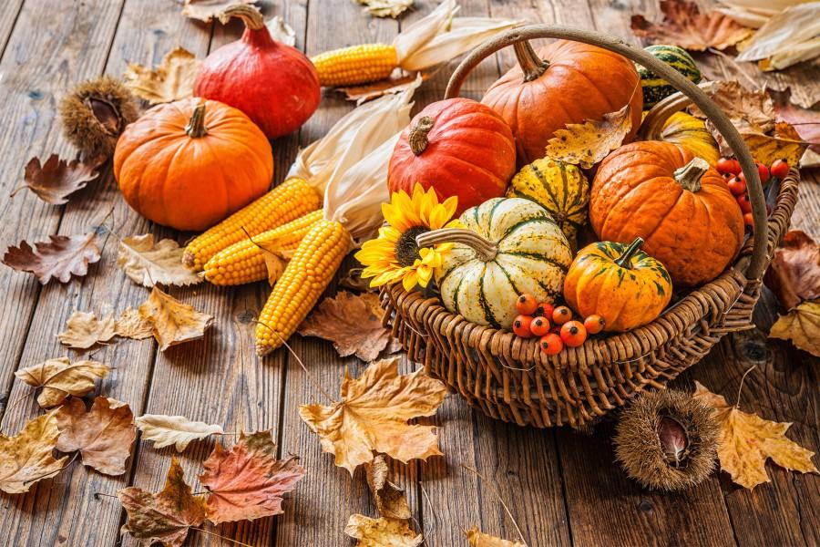 cibi autunno bauer